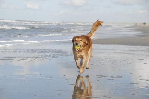 Honden hebben het ook naar hun zin..